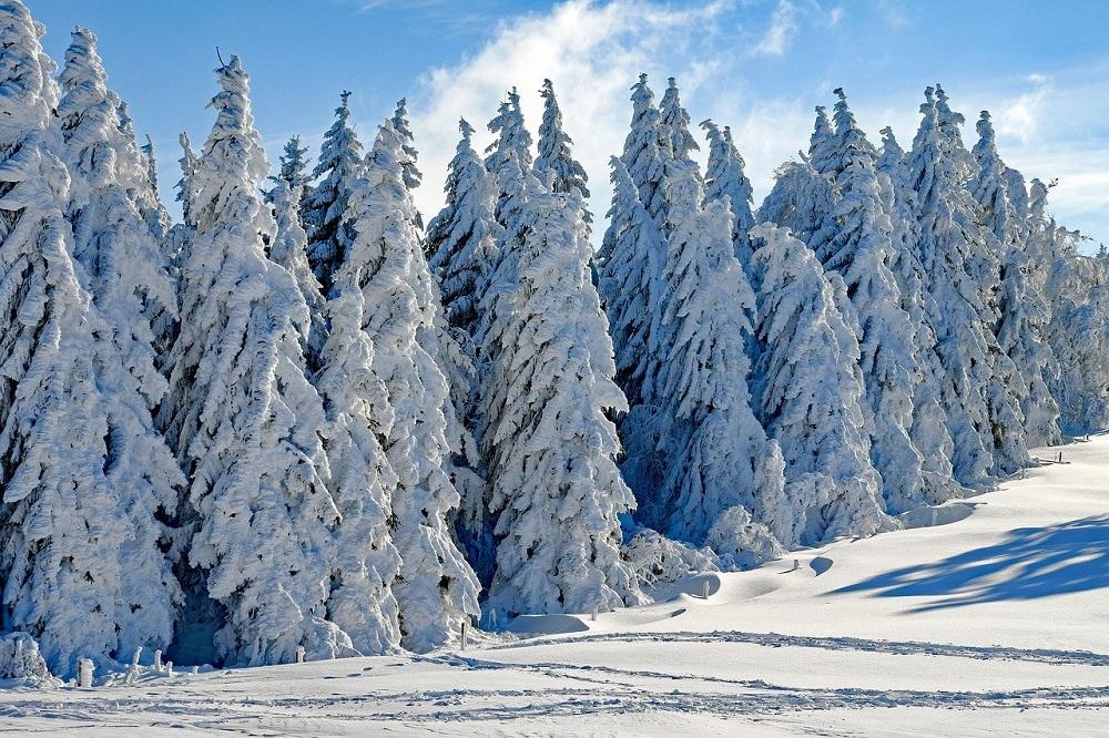 Frohe Weihnachten und besinnliche Feiertage!